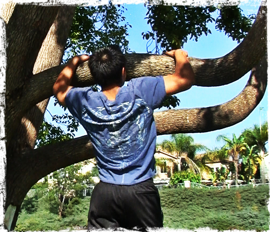 Tree Pull Ups while on Vacation